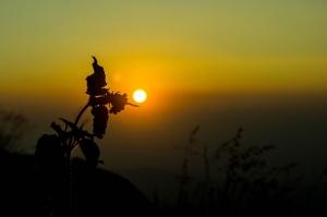Photo by Thangaraj Kumaravel